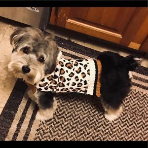 Sweaters - New Cheetah Sweater for Dog Costume or Warmth Sz S
